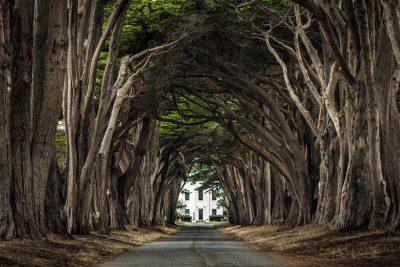 Cypress Tree Tunnel - Point Reyes National Seashore