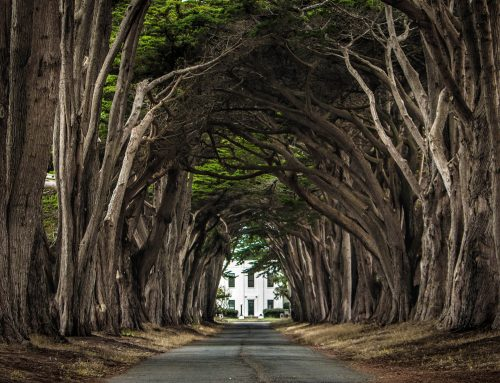 Cypress Tree Tunnel – Point Reyes National Seashore