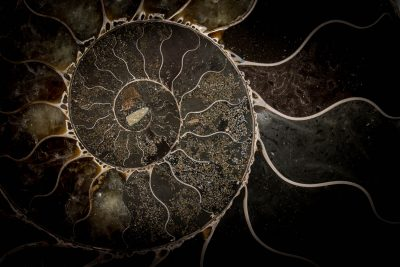 artifacts and fossils photography